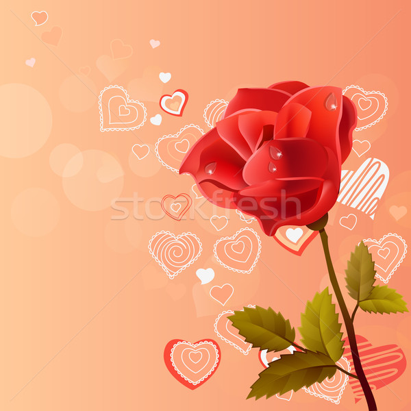 Pink background with rose Stock photo © nurrka