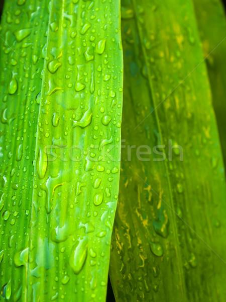 Waterdruppel bamboe blad abstract natuur textuur Stockfoto © nuttakit
