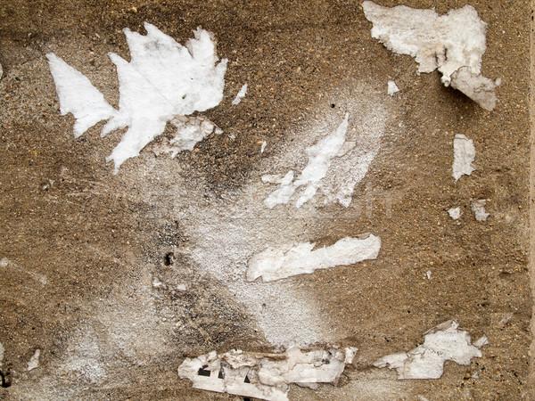Larme commune blanche papier ciment mur Photo stock © nuttakit