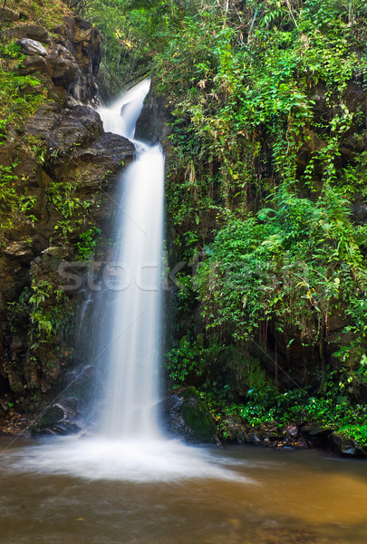 Line cascata foglie verdi foresta pluviale bellezza acqua Foto d'archivio © nuttakit