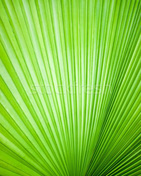 Abstract afbeelding bladeren natuur textuur blad Stockfoto © nuttakit