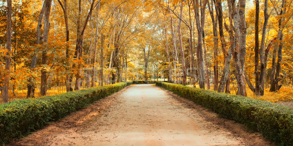Pathway in autumn Landscape Stock photo © nuttakit