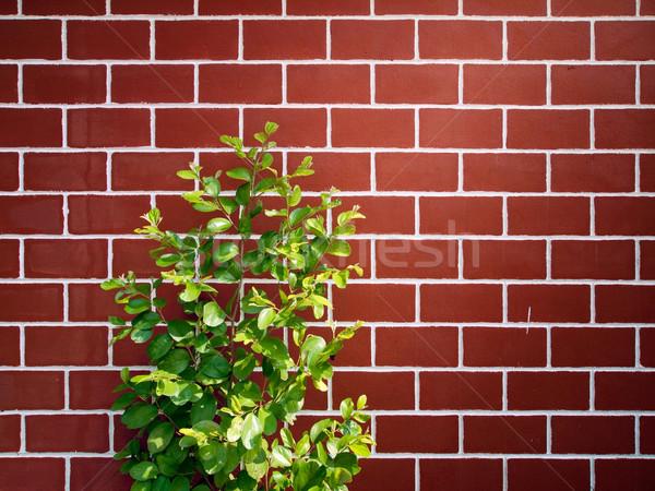 Weinig groene boom Rood muur muur natuur Stockfoto © nuttakit