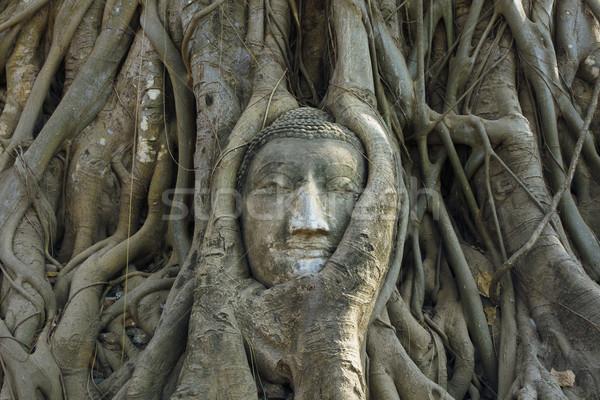 Buddha head Ancient stone carvings Stock photo © nuttakit