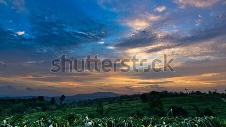 Színes égbolt sárkány gyümölcsfa szürkület idő Stock fotó © nuttakit