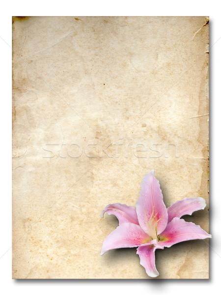 старые Гранж бумаги розовый Лилия цветок Сток-фото © nuttakit