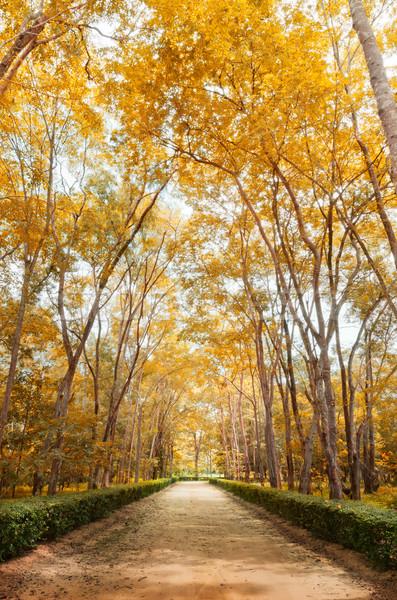 путь осень вертикальный красивой парка лес Сток-фото © nuttakit