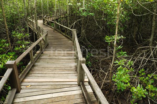 Wood Boardwalks mangrove forest Stock photo © nuttakit