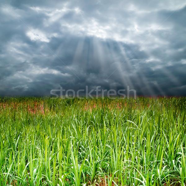 草 フィールド 曇った 空 大気の 光 ストックフォト © nuttakit