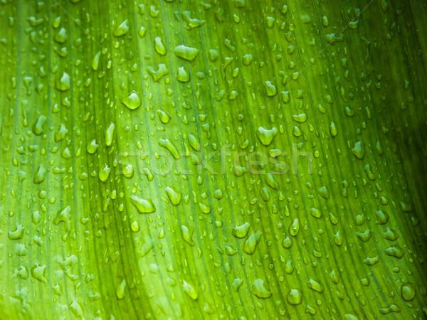 Stock fotó: Banán · levél · vízcsepp · textúra · tavasz · erdő