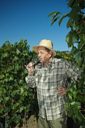 Senior vintner working in vinery Stock photo © nyul