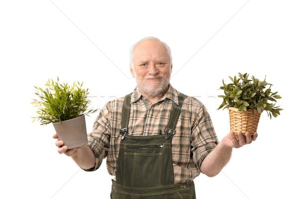 Senior gardener holding plant smiling Stock photo © nyul