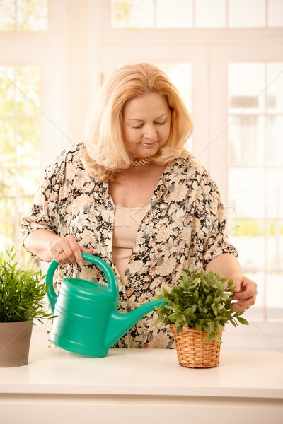 Woman watering plant Stock photo © nyul