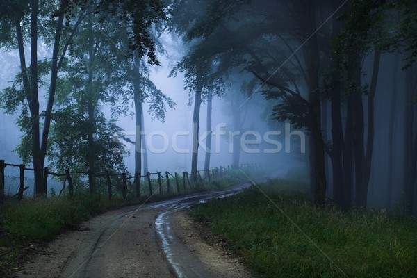 Mystical forest Stock photo © nyul