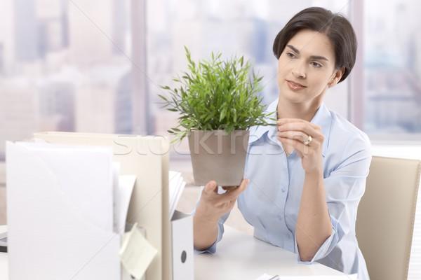 Női irodai dolgozó tart cserepes növény néz zöld Stock fotó © nyul