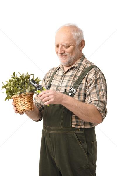 Heiter ältere Mann halten Anlage lächelnd Stock foto © nyul