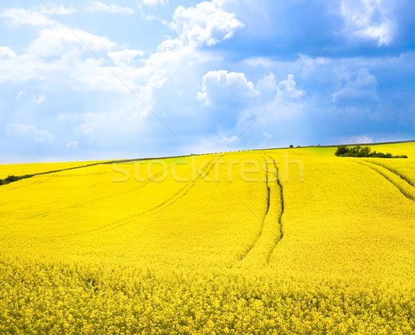 yellow summer landscape Stock photo © nyul