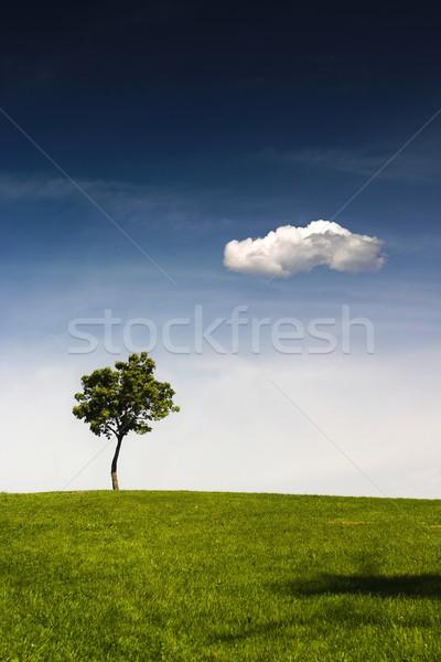 Summer, trees, hill and blue sky Stock photo © nyul