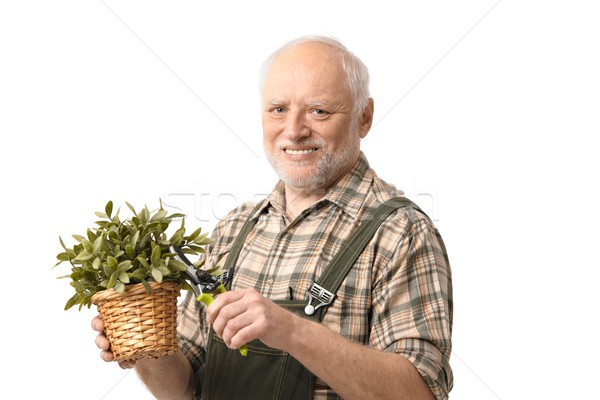 Elderly hobby gardener with clippers Stock photo © nyul