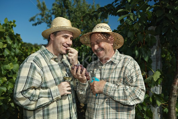 Stock photo: Winemakers tasting grapes.
