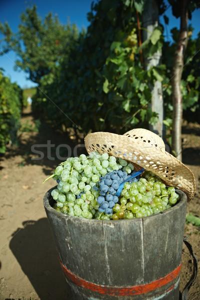 Popo tok üzüm gıda meyve yeşil Stok fotoğraf © nyul