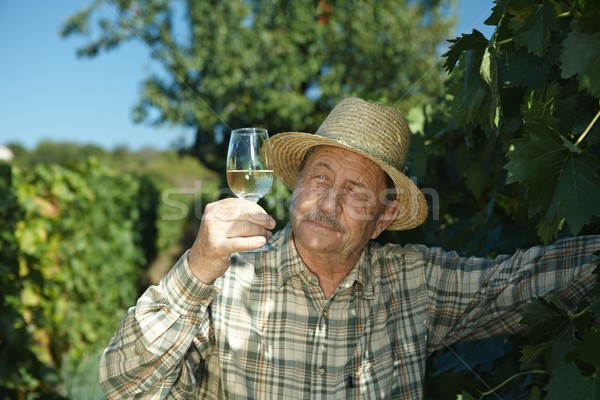Senior vintner trying wine Stock photo © nyul