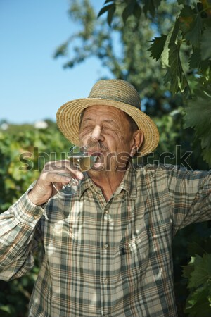 Senior winemaker testing wine Stock photo © nyul