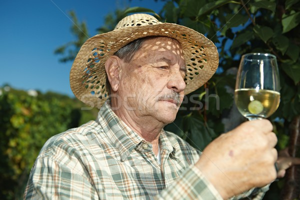 Senior winemaker with glass of wine Stock photo © nyul