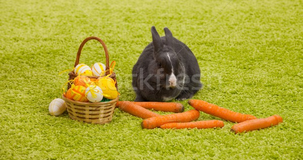 Easter Bunny Stock photo © nyul