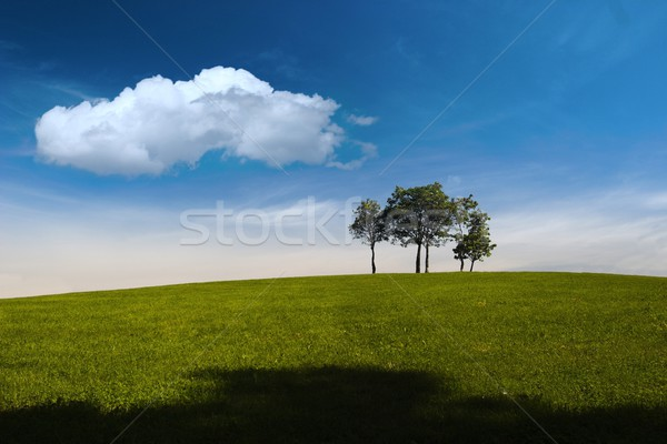 Summer, trees, hill and blue sky Stock photo © nyul