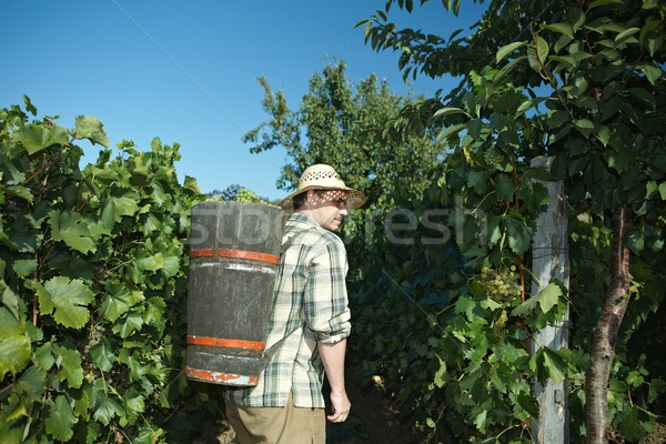 Vintager wearing butt full of grapes Stock photo © nyul