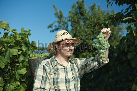 Butt vol druiven gezicht man Stockfoto © nyul