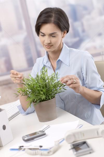 üzletasszony néz cserepes növény ül asztal mosolyog Stock fotó © nyul
