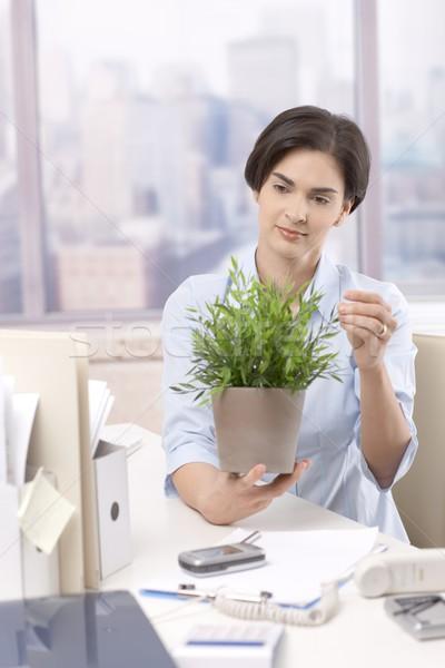 Női irodai dolgozó tart cserepes növény ül asztal Stock fotó © nyul