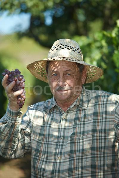 Senior vintner examining grapes Stock photo © nyul