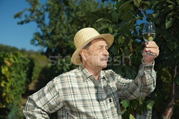 Senior vintner testing wine Stock photo © nyul
