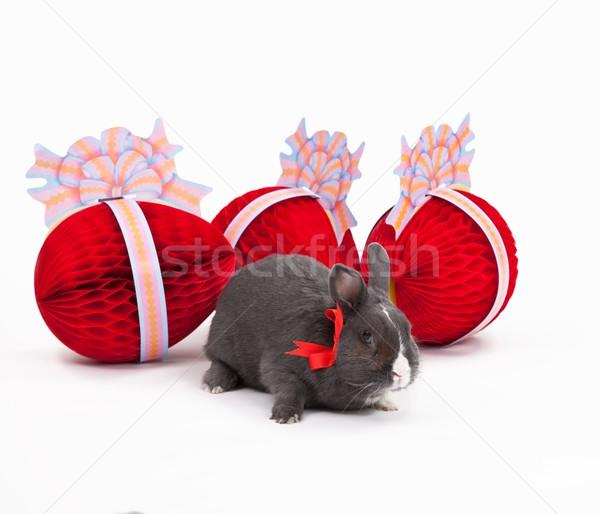 Easter bunny isolated on white Stock photo © nyul