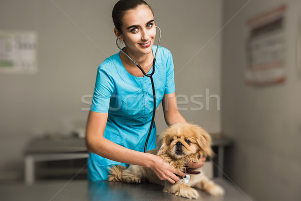 Veterinarian with stethoscope checking up dog Stock photo © O_Lypa