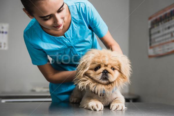 Hund Prüfung Tierarzt Krankenwagen Klinik Stock foto © O_Lypa