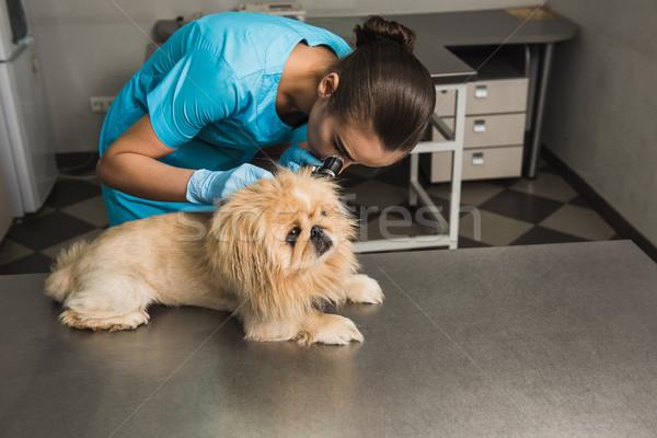 Dog examination at vet ambulance. Stock photo © O_Lypa