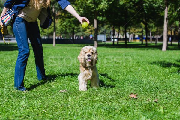 Stockfoto: Meisje · spelen · hond · groene · gazon · park