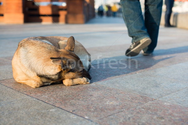 Senzatetto cane strada bugie triste nero Foto d'archivio © O_Lypa