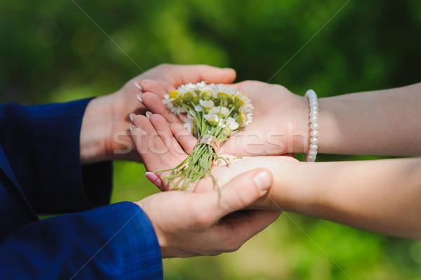 Сток-фото: Daisy · кольцами · невеста · жених · , · держась · за · руки · ромашка