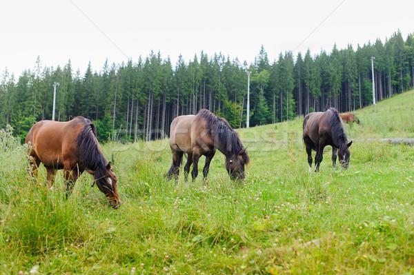 Grazing Horses on the Hillside Stock photo © O_Lypa