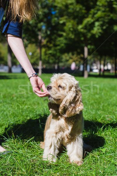 Girl feeding dog Stock photo © O_Lypa