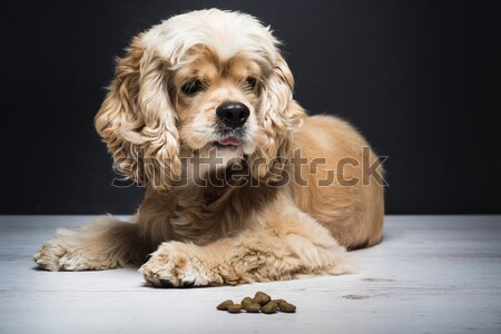 Dog playing with a toy. Stock photo © O_Lypa
