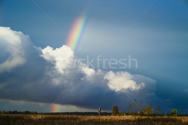 Regenboog hemel natuurlijke veld donkere gras Stockfoto © O_Lypa
