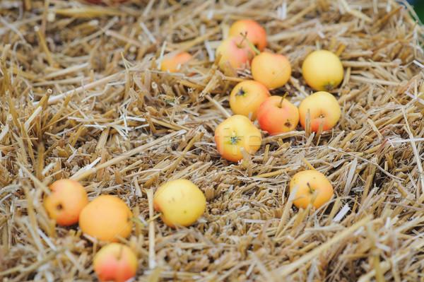 érett almák bála széna alma gyümölcs Stock fotó © O_Lypa