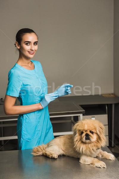 Vet Animal clinic with veterinarian. Stock photo © O_Lypa