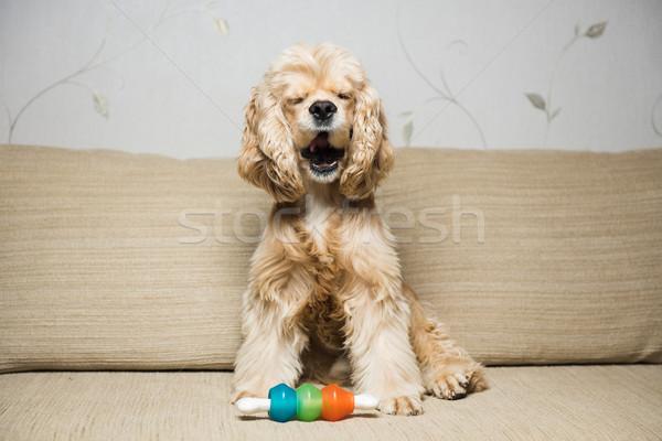 молодые американский собака бежевый диван интерьер Сток-фото © O_Lypa